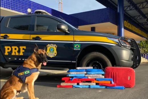 Conquista: Cão farejador encontra mais de 20 kg de maconha em ônibus
