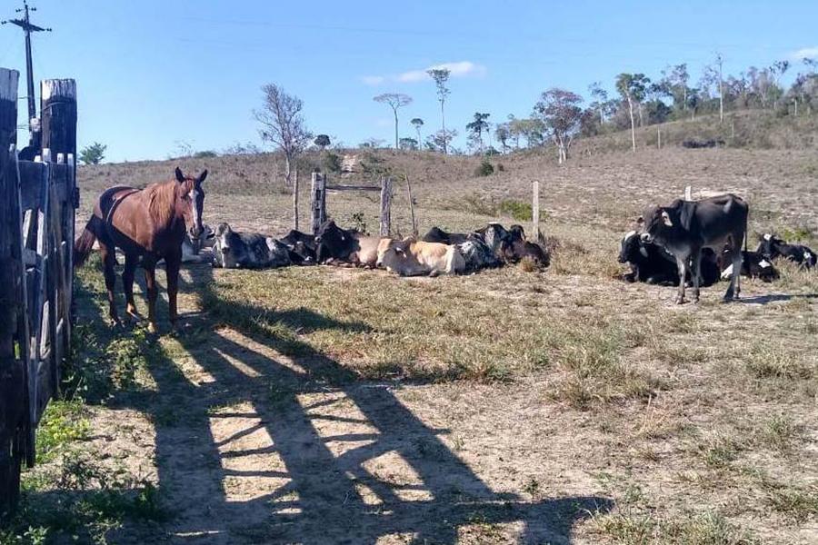 Sudoeste: Gado avaliado em mais de R$100 mil é recuperado pela policia
